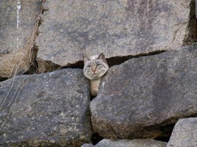 お城の隠し通路を使って外に逃げようとする悪代官面の猫