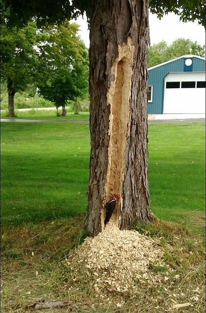 キツツキが木を突きまくった結果